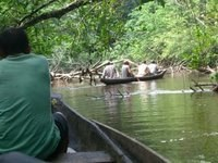 On the Bura Bura River