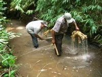 Poisoning the Stream
