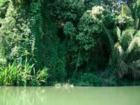 Jungle - Impenetrable