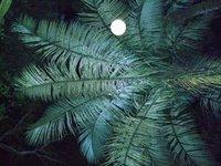 Palms by Dark